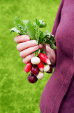 Female hands holding the bunch of various radishes - 208130618