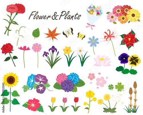 花と植物1