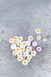 Heart of small white daisies on the textured gray table