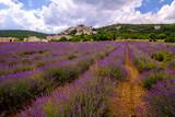 Vue panoramique sur le village de Simiane la Rotonde, Alpes de Haute Provence, france. Champ de lavande au premier plan. - 208140853