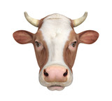 Cow Isolated