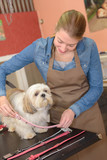 putting back the dog's collar - 208144806