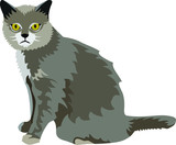 The Grey Cat
