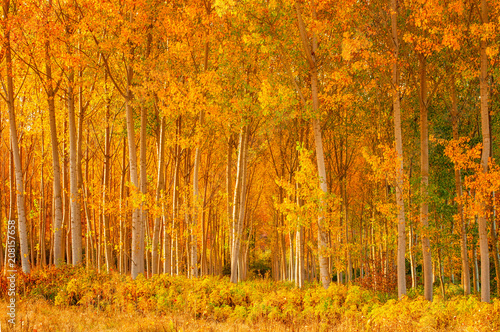 Nice autumnal scene with yellow leaves
