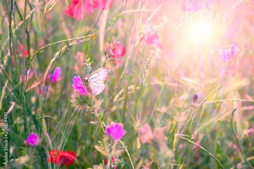 un papillon au milieu de fleurs des champs avec le soleil en fond