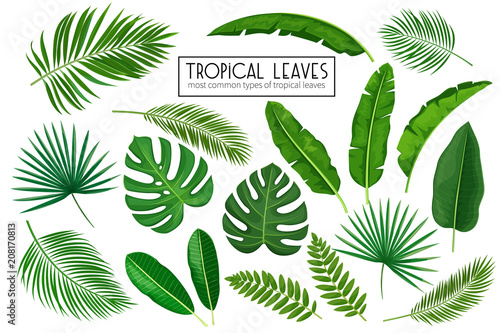 set tropical leaves