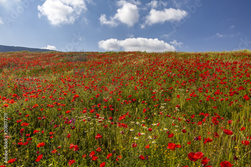 Aluminium Klaprozen Red Poppies & Cloudy Sky