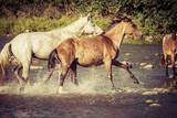 free horse runs trough the splashes of water - 208179022