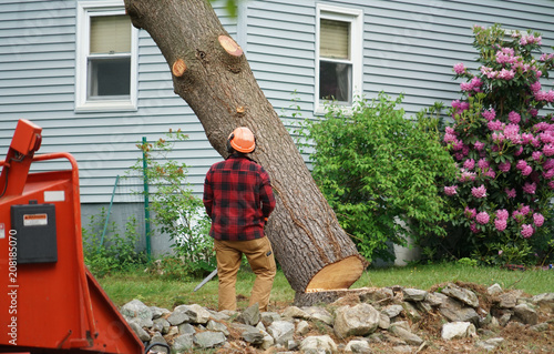 Foto Murales manual worker removing tree in residential area