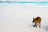 Kangaroos on White Sand Beach - 208186417