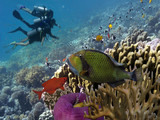 Three divers on the reef - 208191633