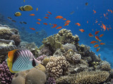 Corals reef and tropical fish - 208191674