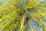 under the tree of Weeping willow