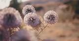 Close-up of beautiful purple wildflowers in autumn field - 208198213