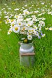 Margeriten in einer alten Milchkanne auf einer Blumen Wiese
