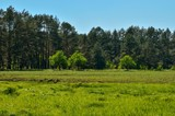 Spring sunny landscape. Green meadow in a beautiful forest.