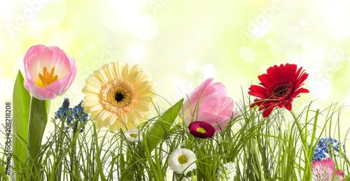 Sommerblumen - 208218208