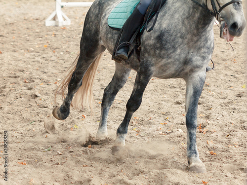 Learning Horseback Riding. Instructor teaches teen Equestrian.