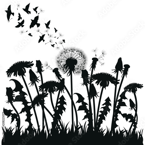 Field of dandelion flowers. Black silhouettes of summer plants on a white background. The outline of a glade with dandelions and flying birds. Illustration for children. Vinyl sticker on the wall. - 208225077
