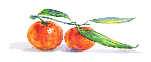 Hand drawn orange mandarin, tangerine with branch. Watercolor fresh citrus fruit on white background. Painting isolated tropical illustration © Cincinart