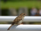 Uccelli - 208236450