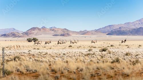 Fotobehang Beige Namibia