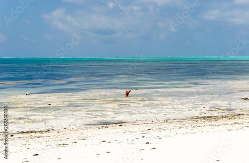Fotobehang Zanzibar Tropical beach at low tide in Jambiani, Zanzibar, Tanzania Africa