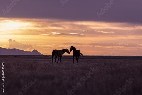 Aluminium Strand Wild Horse Stallions in a Utah Desert Sunset