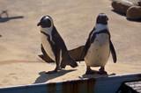 Pinguine - 208256884