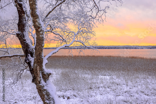 Fotobehang Purper First snow landscape from Sotkamo, Finland.