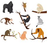 Flat vector set of 9 species of monkeys. Wild animals. Elements for promo poster or banner of zoo park. Wildlife theme