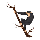 Flat vector icon of chimpanzee on tree branch. Big ape with large ears, black fur and light face. Wild African monkey. Zoo or wildlife theme
