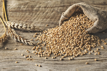 Wheat pile on wooden background