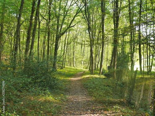 Fotobehang Weg in bos bois forêt vert