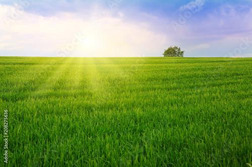 Zachód słońca i zielone pole.