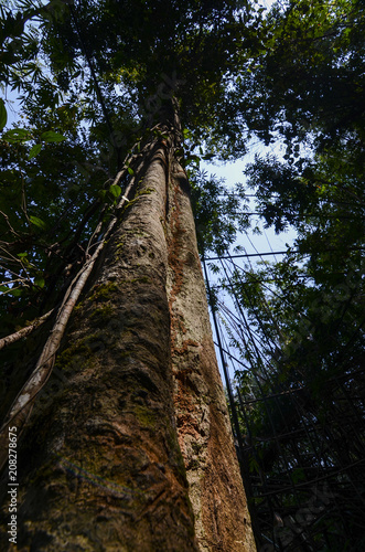 Fotobehang Bamboe Stump of a tall tree in a tropical forest
