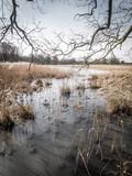 Landschaft in Brandenburg - 208282287