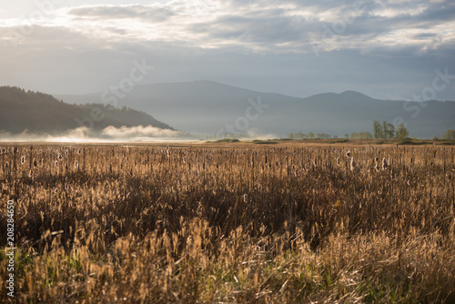 Aluminium Donkergrijs Early morning fog over the golden autumn grasslands