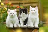 Kätzchen auf einem Hocker im Garten - 208285651