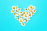 daisies in a heart shape on blue background