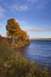 Fall Leaves on the St. John River
