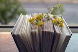 background. yellow flowers lie on the pages of an open book