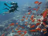 Three divers among fish - 208330422