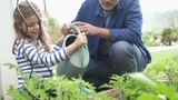 Father and daughter gardening together, home vegetable garden - 208338887
