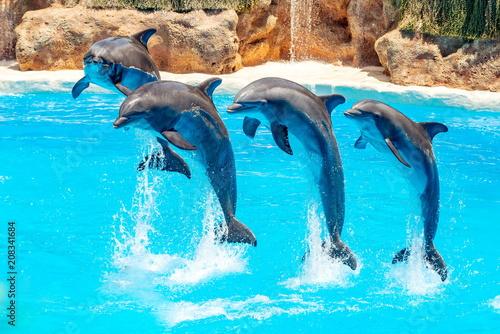 Aluminium Dolfijn Dolphin jumping above