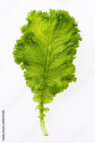 Foto Murales fresh green salad chicory isolated on white background