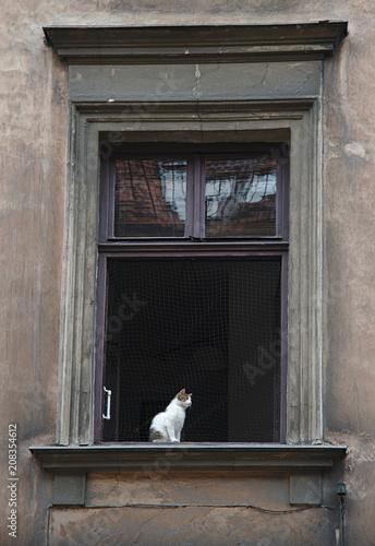 Katze am Fenster in Krakau - 208354612