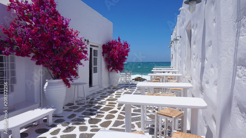 Fototapeta Photo of beautiful bougainvillea flower with awsome colors in picturesque Greek island with deep blue waves