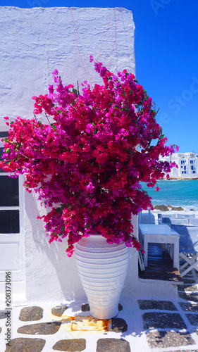 Photo of beautiful bougainvillea flower with awsome colors in picturesque Greek island with deep blue waves              - 208373096