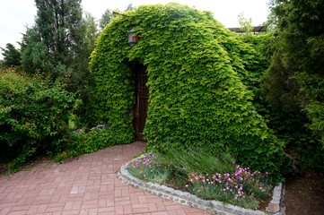 Entrance to a small house, lined with a creeper. It looks like a scene from a fairy tale.